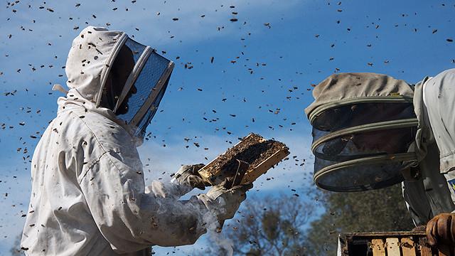 ミツバチの生態の面白さを描いた、良質な科学ドキュメンタリ