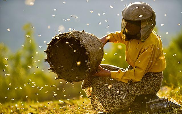 北マケドニアで自然養蜂をして暮らす女性を追ったドキュメンタリー