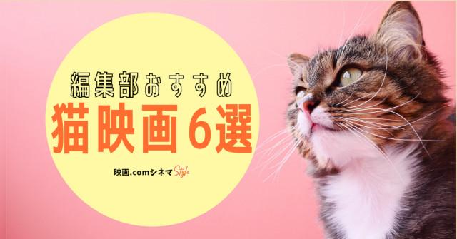 「泣きたい私は猫をかぶる」「gifted ギフテッド」「ボブという名の猫」などをご紹介!