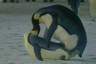 童貞ペンギン