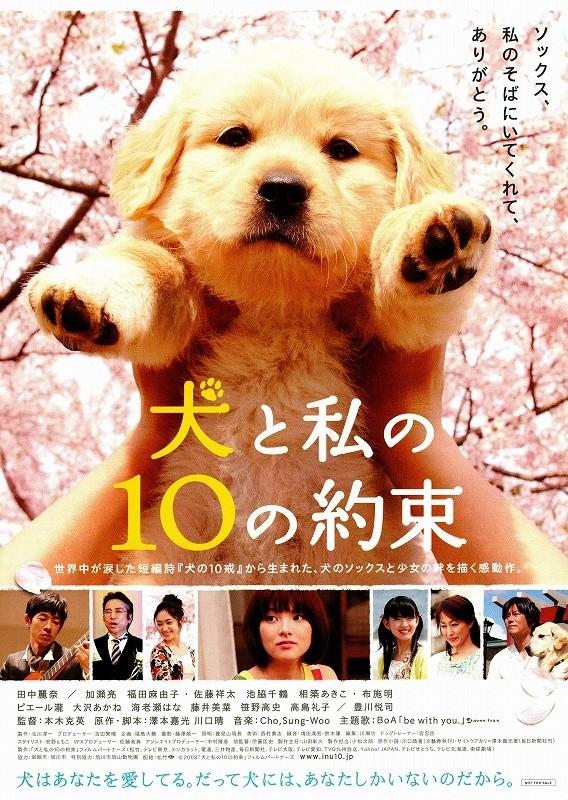 「犬と私の10の約束」の画像