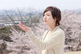 「桜、ふたたびの加奈子」