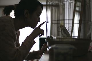 籠の中の予告編・動画