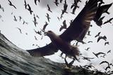 リヴァイアサンの映画評論『言語や習慣を超え、想像力に直に訴える海洋ドキュメンタリー』