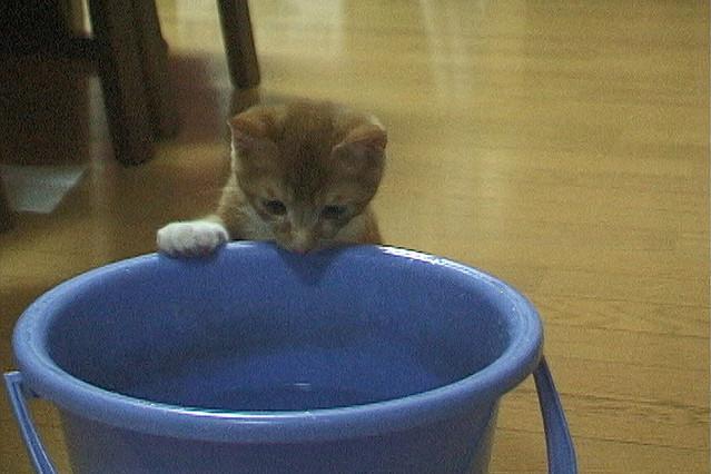 みんな生きている 飼い主のいない猫と暮らして