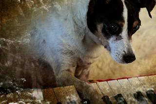 ハート・オブ・ドッグ 犬が教えてくれた人生の練習