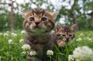 劇場版 岩合光昭の世界ネコ歩き コトラ家族と世界のいいコたちの予告編・動画