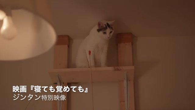 メイキング映像:猫のジンタン