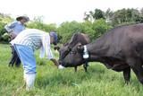 被ばく牛と生きる