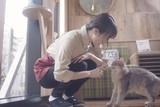 猫カフェの予告編・動画