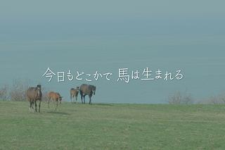 今日もどこかで馬は生まれるの予告編・動画