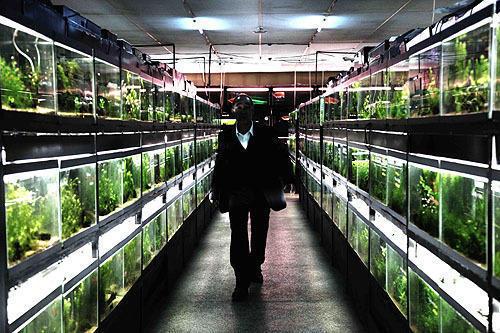 表では地域最大を誇る熱帯魚店経営者の顔を持つが……