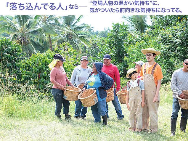 ハワイではコーヒー豆の収穫にもチャレンジ! 南国の人々は底抜けに明るい!