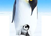 かわいらしい赤ちゃんペンギンと父母のきずな──感動的な姿は本作でしか見られない!