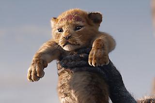 ライオン・キングの注目特集